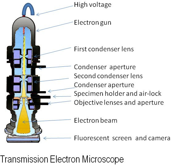 Electron Microscope   Working   2 Important Types   Uses
