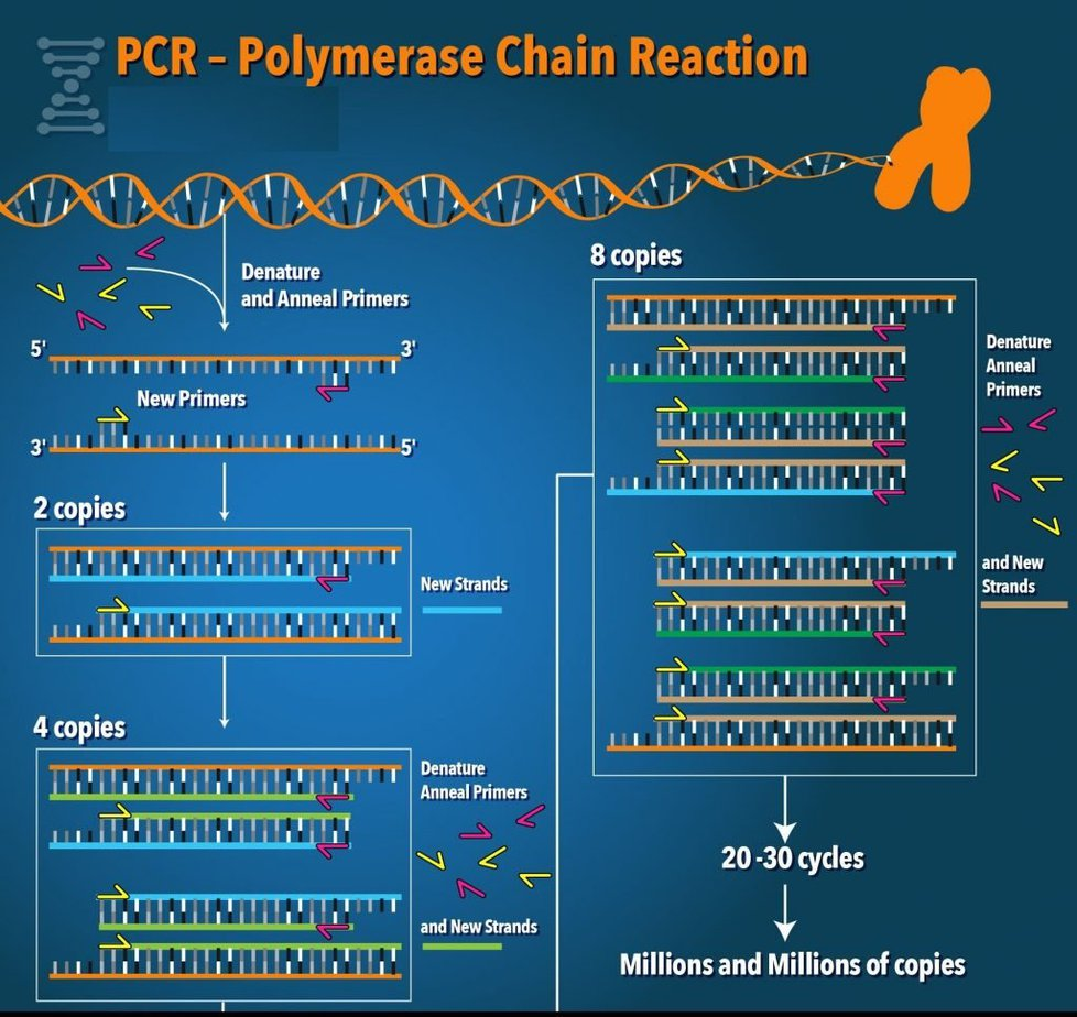 Polymerase Chain Reaction | An important tool in molecular biotechnology